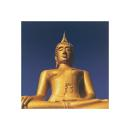 Golden Buddha - Anonymous (40cm x 40cm)
